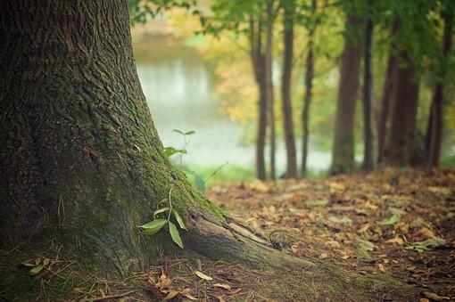 Forêt certifiée par FSC Rogister-Lacroix